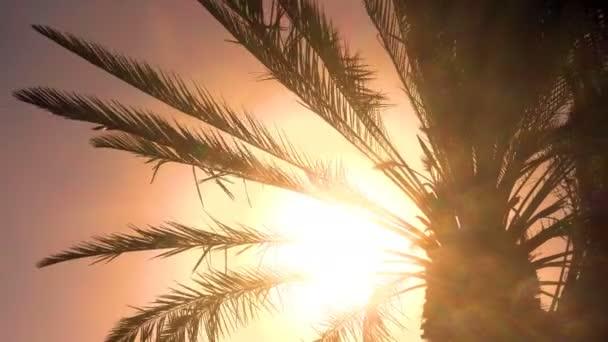 Palmový strom ve větru - siluety palmových listů ve větru
