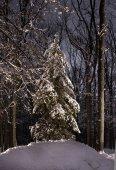 foresta invernale bella di notte