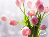 bouquet of pink tulips in vase against window