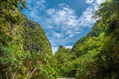 Beautiful tropical nature