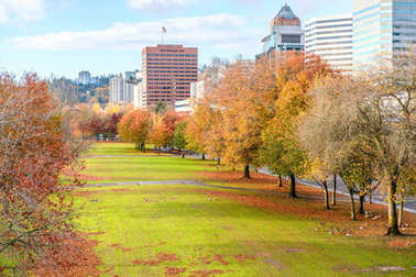 city park and buildings at autumn