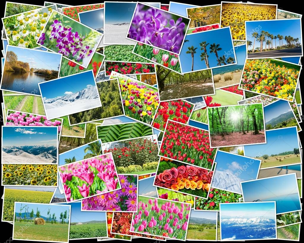 Collage of various nature photos