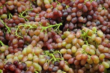 ripe grape banches