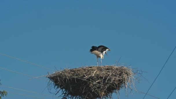 Rodina ve velké hnízdo čápů. Modrá obloha