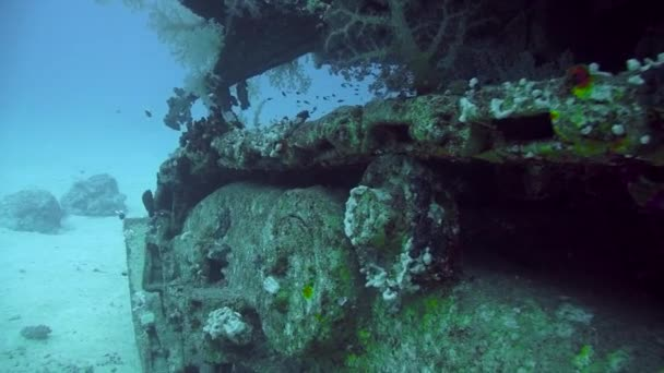 Divers visiting the wreck Giannis D, Red Sea, Sharm el Sheikh, Egypt