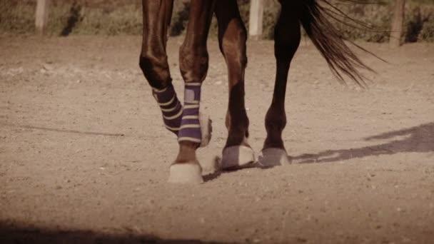 zblízka kopyt koně, které rychle přejde během závodu