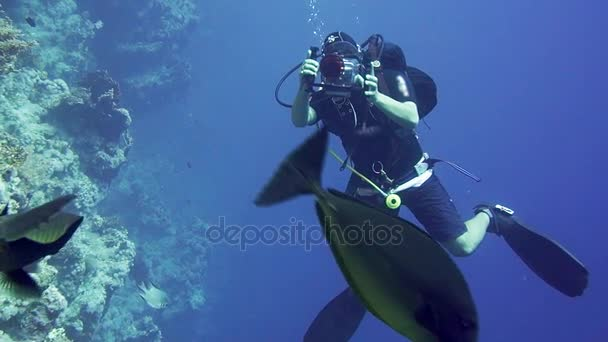 Group of scuba divers ascending on water surface in Egypt.