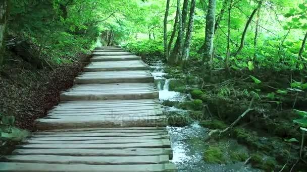 Chůze přes horský Les nedaleko jezera. Pohled z Plitvická jezera.