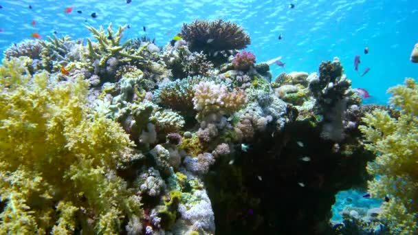 Видео кораллов и рыб марса алама