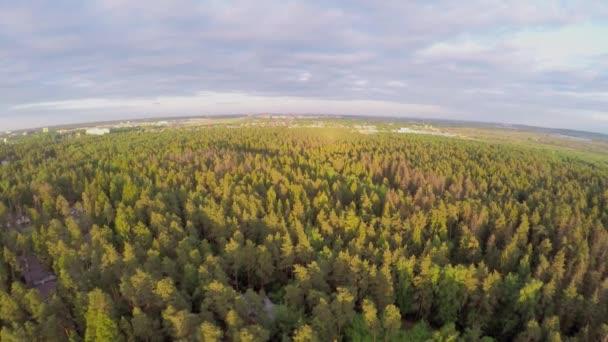 Les s naprosto na obzoru