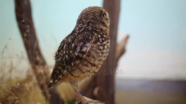 owl sits on branch and blinks in aviary