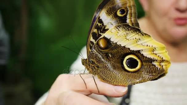 krásný tropický motýl sedí na prst