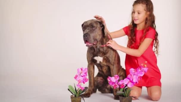 Beautiful girl caresses dog in studio