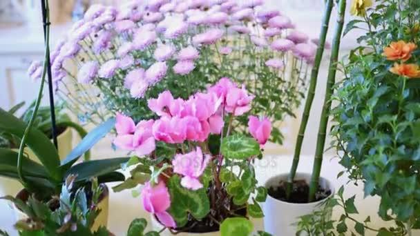Kwiaty Domowe W Doniczki Na Stole W Kuchni