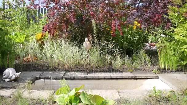 Empty Water Tank Trees Shrubs Sunny Garden — Stock Video © Paha_L ...