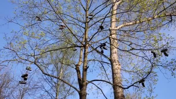 Viele Schuhe im Zusammenhang mit paarweise hängt an einem großen Baum im Wald