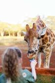 little girl feeding giraffe