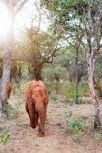 elephant in safari park