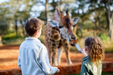 Kids feeding giraffe in Africa
