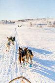 Fotografie Rodeln mit husky Hunde in Nord-Norwegen