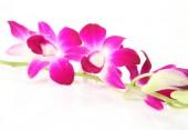 Fotografie pobočka růžová orchidej