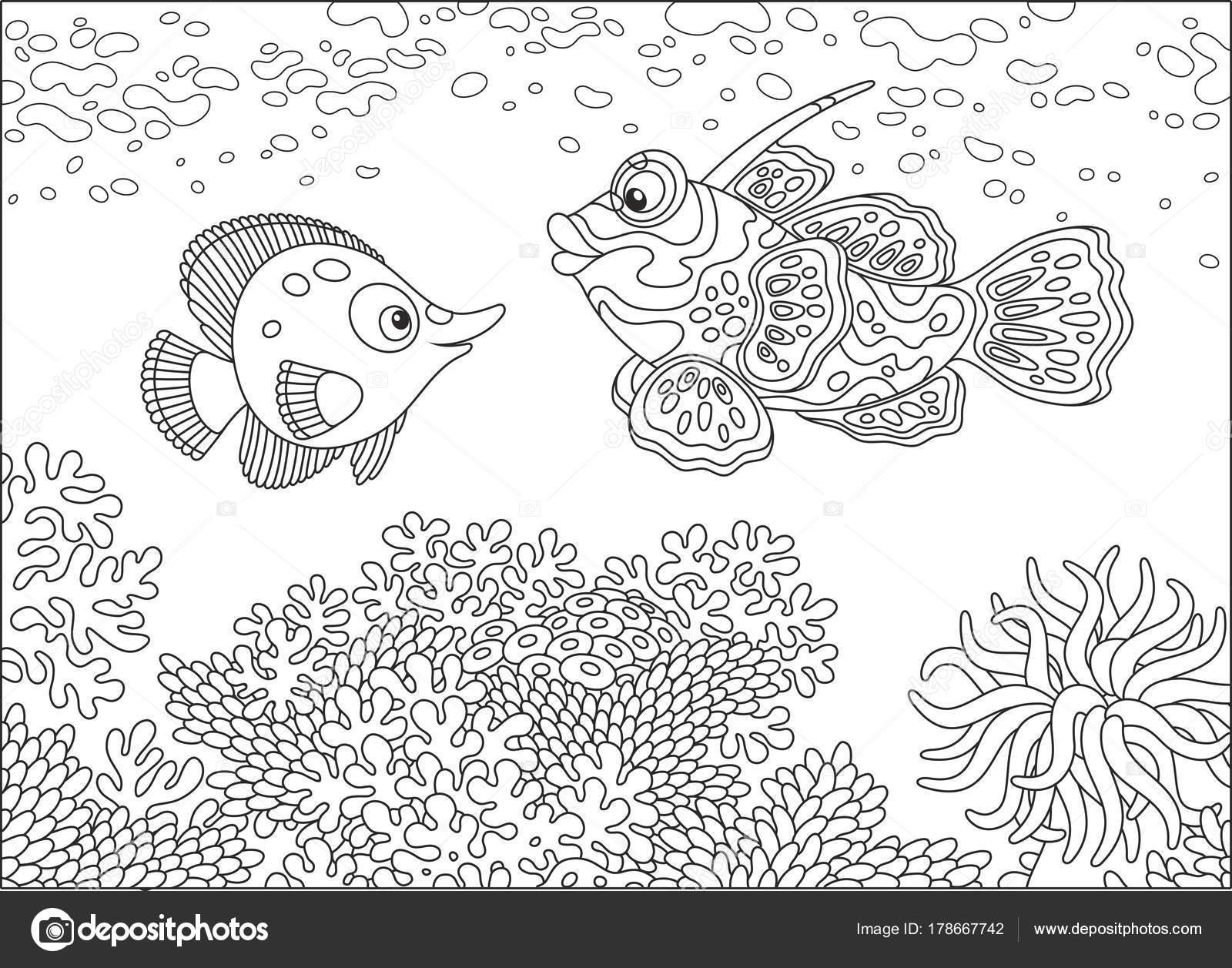 Komik Bir Kelebek Balık Bir Mandalina Balık Yüzme Tropikal