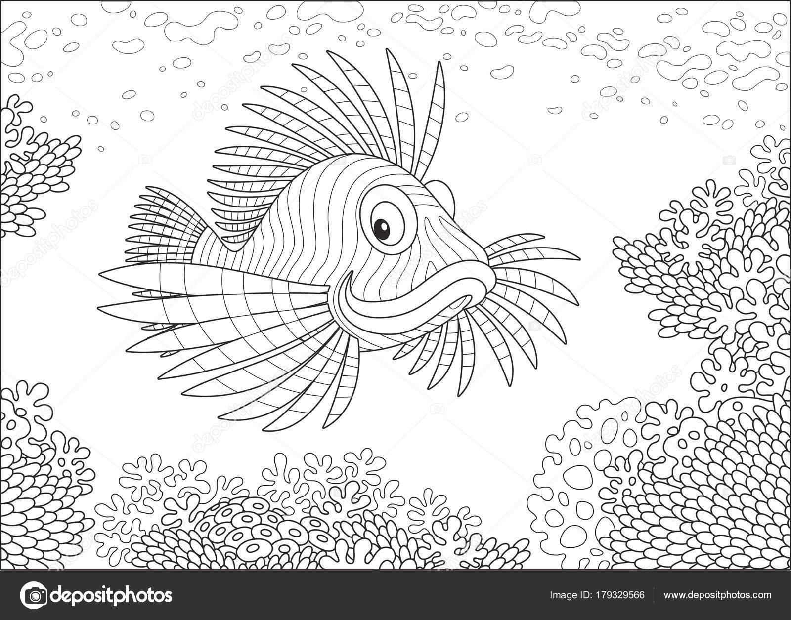 Pez Escorpión Rayado Nadando Sobre Arrecife Coral Mar Tropical Una ...