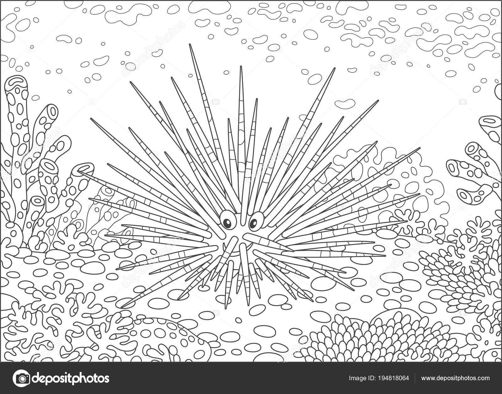 Dibujos De Erizos De Tierra: Erizo De Mar Dibujo Para Colorear