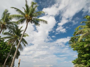 Tropical palms and cloudy sky