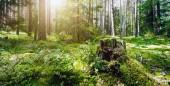 Letní lesní džungle