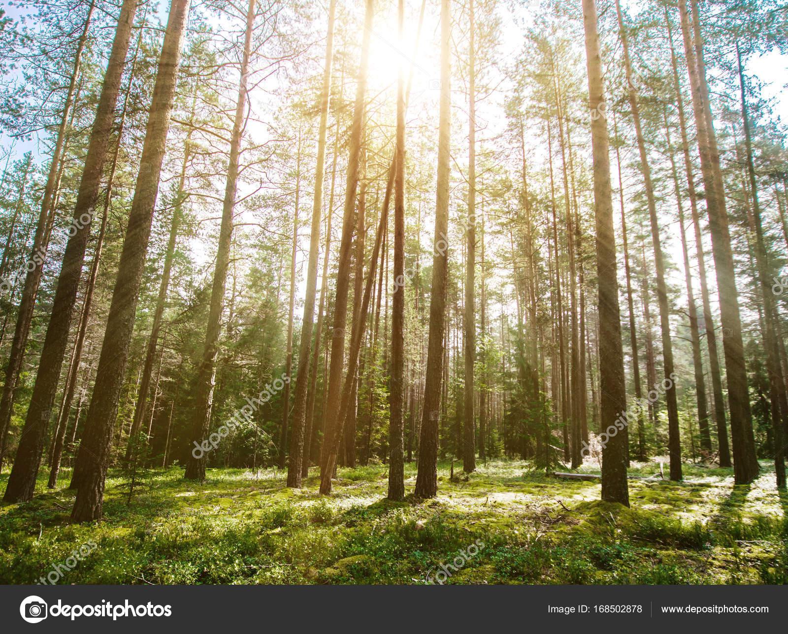 Planten En Bomen : Bos. wilde planten en bomen u2014 stockfoto © 1xpert #168502878