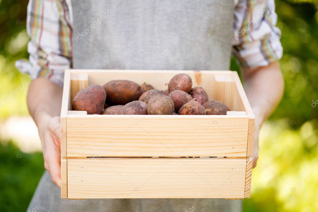 Man holding box with potatoes