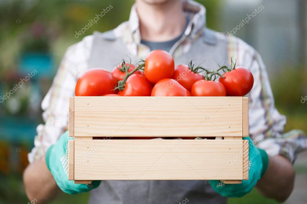 Photo of farmer with tomato
