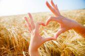Fénykép a szív, a tenyerét a mező