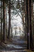 Foto di pista di neve e gli alberi nei boschi