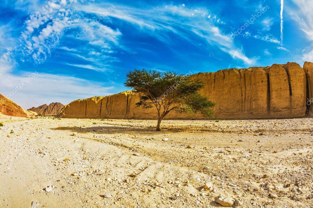 Stone desert near seaside resort