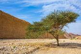strom, který roste uprostřed pouště