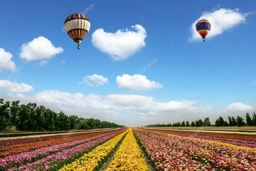 balloons flying over field with flowers