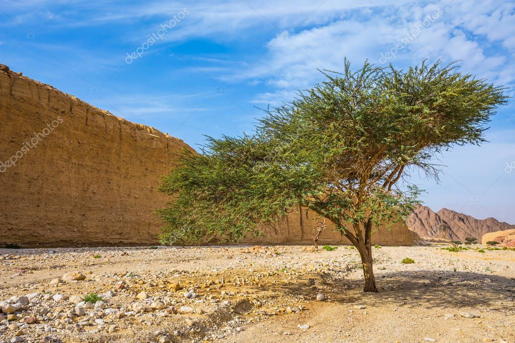 tree growing in middle of desert