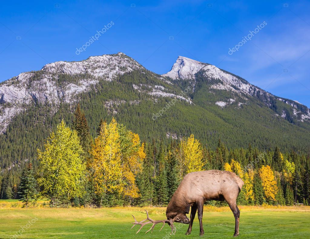 deer antlered on mountain valley