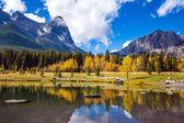 Fotografie Vergilbte Espen umgeben See