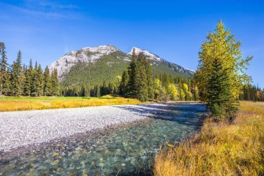 Shallow stream among grass