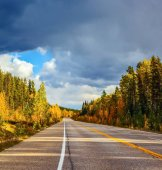 Road and autumn forest