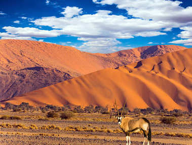 Oryx grazing in the Namib desert at the mountain in Sunset of Namibia, South Africa. The concept of exotic and extreme tourism stock vector