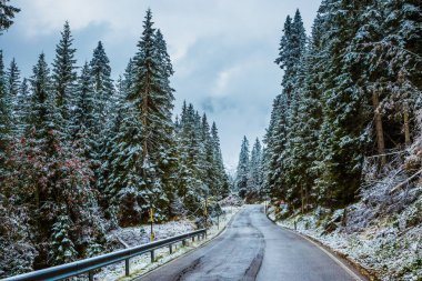 Winter has come. Wet road in the mountains among the snow-covered firs and pines