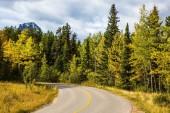 Gialli dellaspen snelli al lato della strada adiacente labete verde. La calda estate indiana in Canada. Montagne rocciose