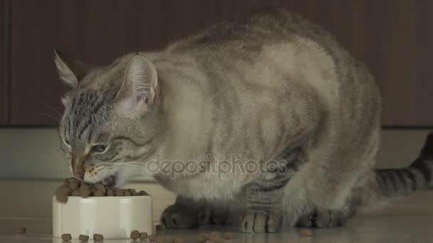 Cat eats dry food slow motion stock footage video