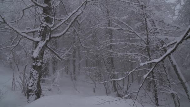 Snowy forest on North slope Aibga Ridge Western Caucasus at all-season resort Gorky Gorod stock footage video