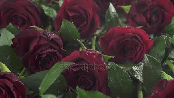 Déšť na pozadí červených růží s vodou kapky zpomalené stopáže video