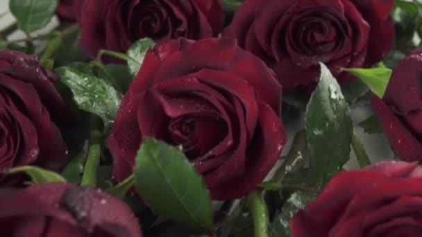 Pozadí z červených růží s vodou kapky zpomalené stopáže video